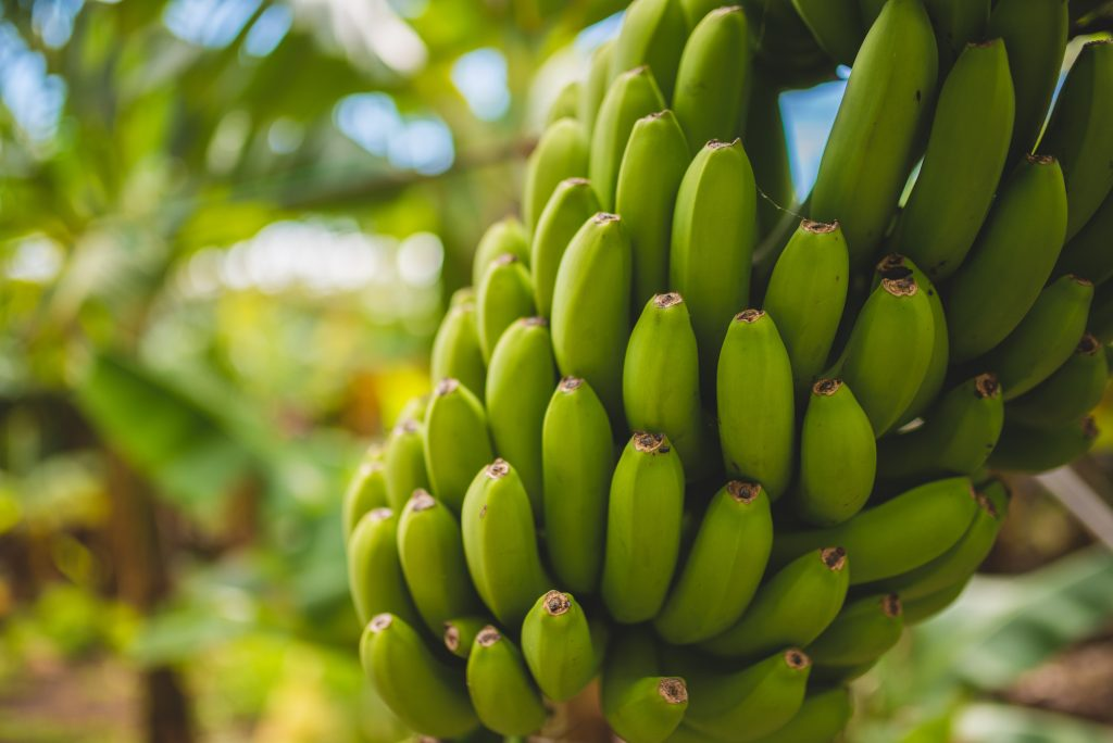 banane crescute